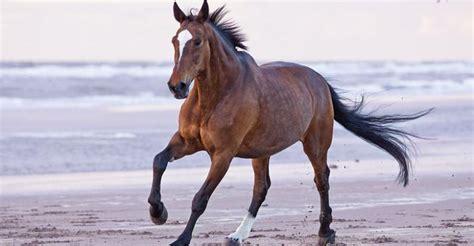 bilder von pferden im schnee fuer facebook bilder und