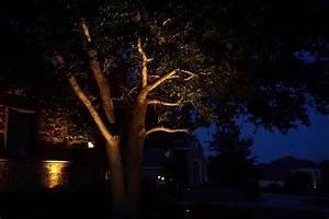 Tree uplight exterior lighting dallas landscape bg
