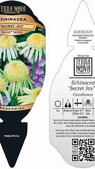 Echinacea 'Secret Joy'   TERRA NOVA® Nurseries, Inc.