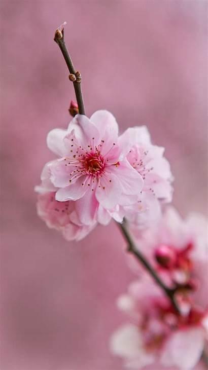 Pink Flower Desktop Background Wallpapers Flowers Phone