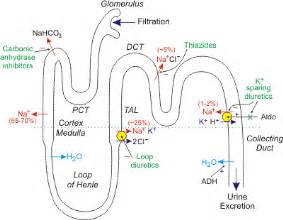 image gallery loop diuretics