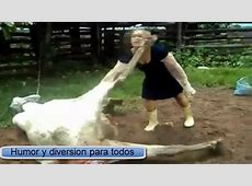 Cow kick in face fail YouTube