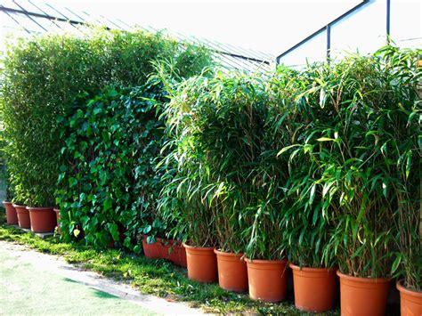 Garten Bepflanzung Sichtschutzsichtschutz Pflanzen Garten