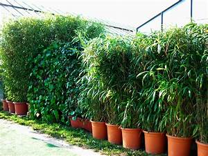 sichtschutz mit pflanzen sichtschutz pflanzen balkon With französischer balkon mit bambus pflanzen garten