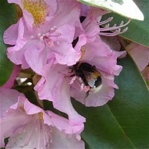 Blumen Für Schatten : bunte blumen f r new england gardens die wie schatten ~ Whattoseeinmadrid.com Haus und Dekorationen