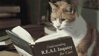 Cat Reading Professor Cats Questions Longwood Buzz
