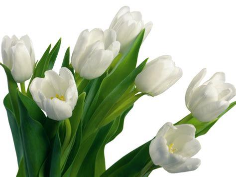 Frische Wanddekoration Mit Pflanzenwanddekoration Mit Pflanztoepfe by Die Tulpe Bringt Frische Mit Sie Symbolisiert Den Fr 252 Hling