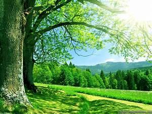 summer nature photos wallpaper ,nature summer pictures ...