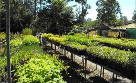 Kumbartcho Native Plant Nursery Brisbane