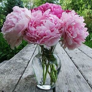 Vase Of Peonies Pictures, Photos, and Images for Facebook