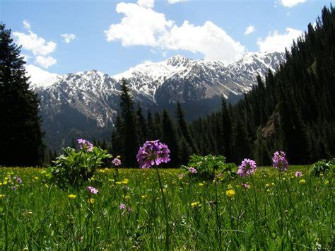 kyrgyzstan trek   valley   flowers  karakol