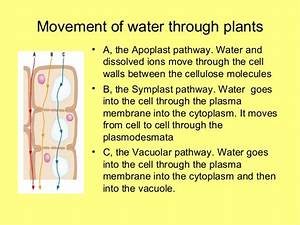 As Plant Transport