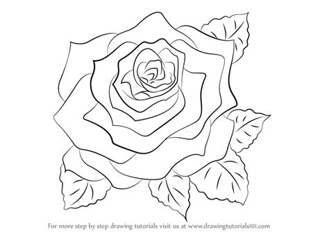 learn   draw  rose rose step  step drawing