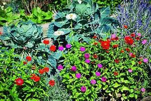 Plantes Amies Et Ennemies Au Potager : association l gumes et fleurs balades et jardins ~ Melissatoandfro.com Idées de Décoration