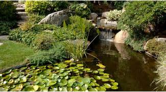 Water Garden Water Garden With Aquatic Plants Splendid Japanese Water Garden