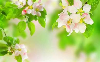 Flowers Spring Computer Wallpapers