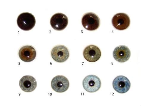 what s the most common eye colour in lithuania
