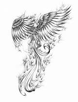 Phoenix Coloring Pages Fawkes Sketch Templates Template sketch template