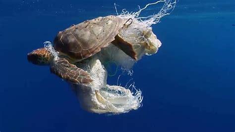 plastikmuell  unseren ozeanen zdfmediathek