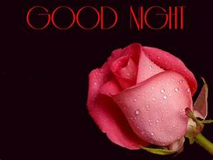 Good Night Flower Images Free - Life Style By Modernstork.com