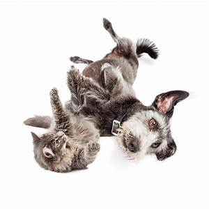 Playful Cat And Dog Rolling Around Together Stock Photo ...