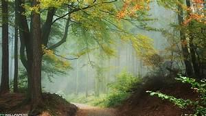 Misty, Forest, 1080p, 2k, 4k, 5k, Hd, Wallpapers, Free, Download