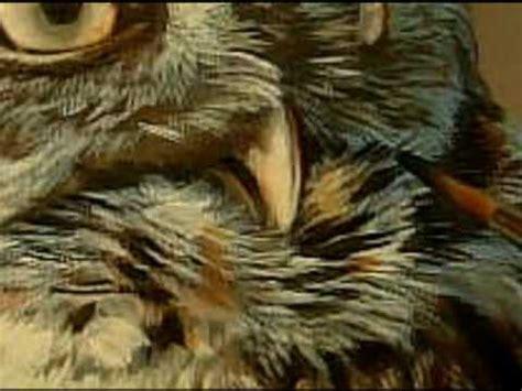 wildlife art owl painting watercolor wildlife art