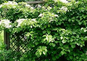 B Und K Winsen : begr nte w nde kletterpflanzen zur fassadenbegr nung meine pflanzen empfehlung ~ Orissabook.com Haus und Dekorationen