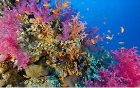 Seabed  Coral Reef With Coral And Fish Raja Ampat  Indonesia      Coral Reef Wallpaper 1920x1080