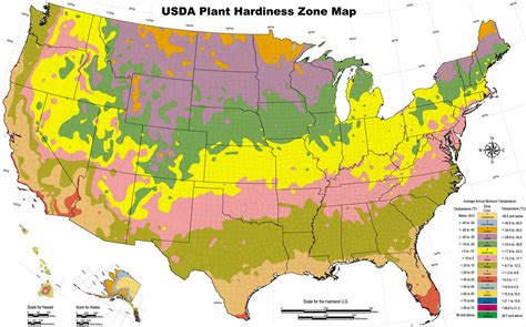 Zone 5 Gardening, Zone 5 Plants, And Gardening Advice For