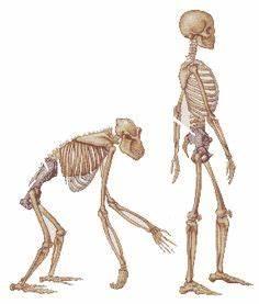 Ardipithecus Group of Human Ancestors