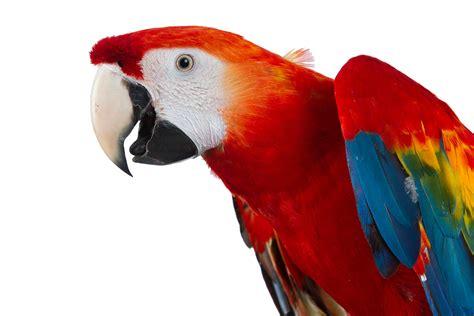 Os 10 Animais Mais Lindos Do Mundo