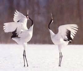 Crane 鶴 に対する画像結果
