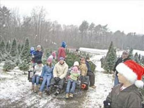 christmas tree farms in topsfield ma where you can cut down trees ingraham tree farm essex national heritage area