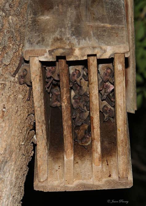 bat box images  pinterest bat box bird