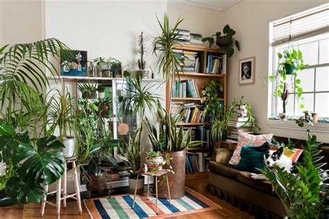 This App Helps You Choose Indoor Plants For Each Room Of