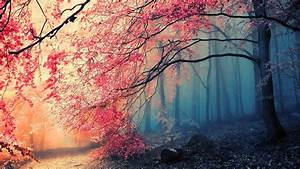 Red, Tree, Leaves, Anime, Wallpapers