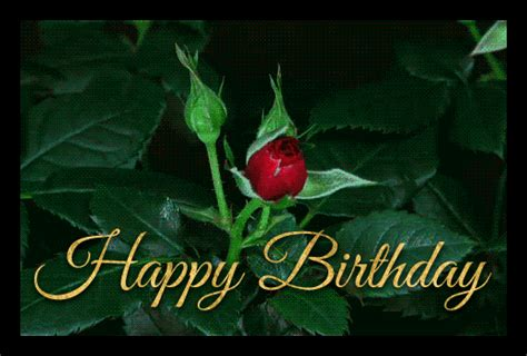 beautiful flowers happy birthday gif wishes  share