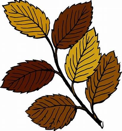 Leaves Branch Autumn Clip Svg Onlinelabels