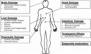 Human Body Vital Organs Diagram