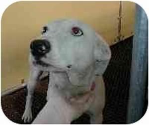 Dove - Needs Foster | Adopted Dog | Cincinnati, OH ...