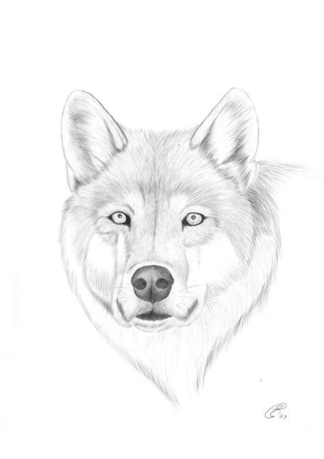 lupo disegno facile per bambini immagini di disegni difficilissimi