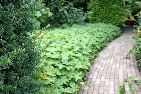 bodendecker fuer die verschiedensten situationen pflanzen