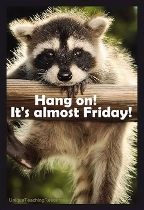 Almost Friday Meme - 38 best images about meme days weeks months holidays on pinterest mondays good morning