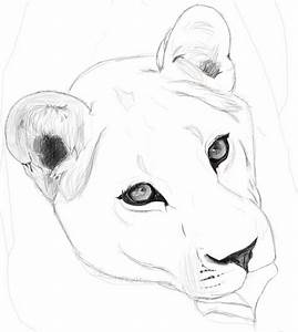 Lioness Outline Tattoo