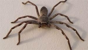 Se Débarrasser Des Araignées : comment se d barrasser des araign e ~ Louise-bijoux.com Idées de Décoration