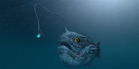 Eight Ugliest Ocean Creatures • Scuba Diver Life