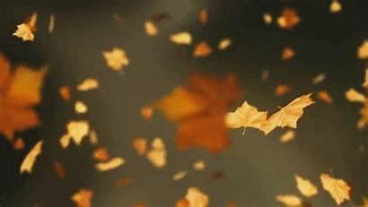 Leaf October Autumn Flying He Noise Keep