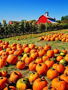 Everything, You, Need, To, Know, About, Picking, The, Perfect, Pumpkin, This, Fall