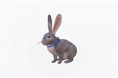 Bunny Easter 3d Google Animal Whiskers
